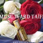 Musc Ward Taïfi