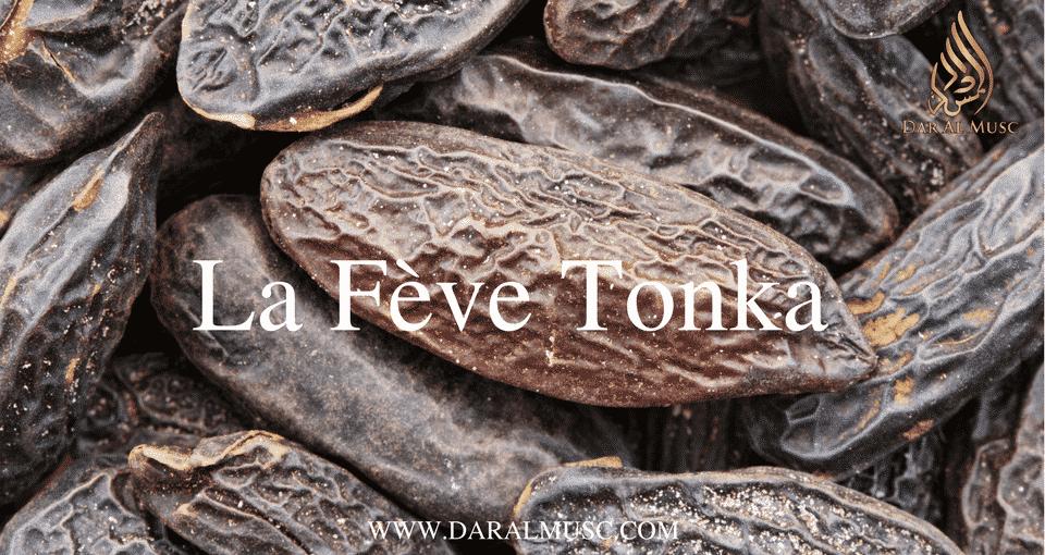 La fève tonka en parfumerie